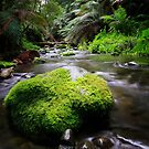 Beautiful Stream by Shannon Rogers
