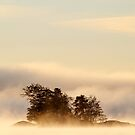 7.10.2015: Island in Autumn Morning Fog by Petri Volanen