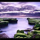 Turrimetta Purples by JayDaley