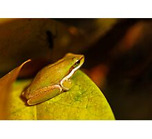 Gorgeous Green Frog Photographic Print