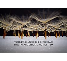 Protect trees in colour  Photographic Print