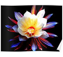 Cereus Flower-Night blooming Poster
