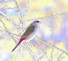 Watercolour Finch by Rookwood Studio ©