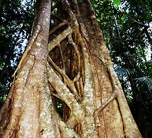 Tree Coffs Harbour Rainforrest by LESLEY B