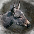 The seaside donkey by almaalice
