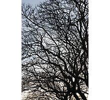 tangled Photographic Print