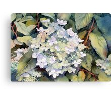 White Hydrangea Canvas Print