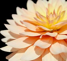 Peach Dahlia super close up. by Kerry McQuaid