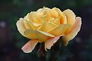 Tangerine Bloom by Astrid Ewing Photography