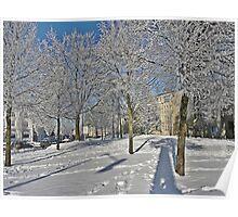 White Winter Trees Poster