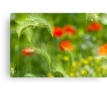 Green field grass with red poppies as background Canvas Print