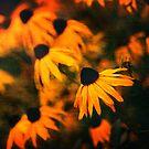 Coffee Coloured Summer by Matthew Pugh