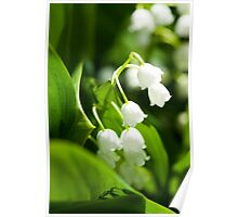 Lily of the valley flower Poster