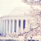 Cherry Blossoms at the Jefferson Memorial Washington DC by edarlingphoto