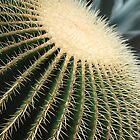 Cactus by Vac1