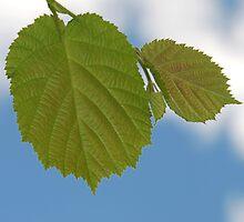 Leaf by Vac1
