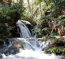 Stoney Creek (vertical) by Annlynn Ward