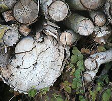 Tree stories II by LynnEngland