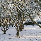 An Orchard of Snow, Ireland by Orla Cahill Photography