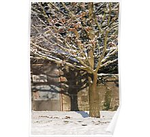 A Snowy Tree Bathed in Sunlight   Poster