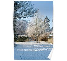 Delicate Snow Tree   Poster