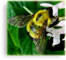 Bee At The Heart Of The Matter Canvas Print