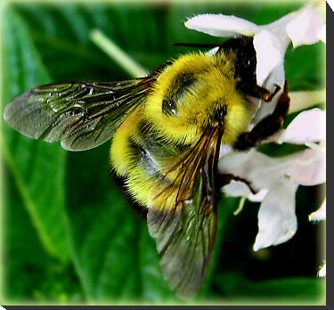 Bee At The Heart Of The Matter by Roger Sampson
