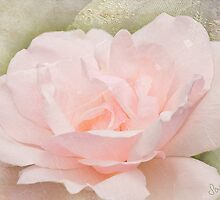 Garden Rose - Many Happy Returns by Sarahbob