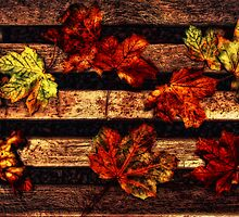 Leaves on a Bench by Den McKervey