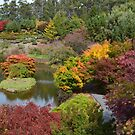 Autumn in Tasmania by Judi Rustage