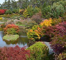 Autumn in Tasmania by Judi Rustage
