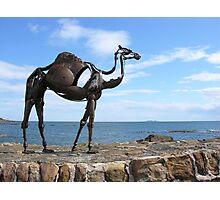 heavy metal camel Photographic Print
