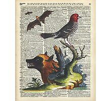 Animals Zoology old illustration over a Old Dictionary Page,Forest,Nature Photographic Print