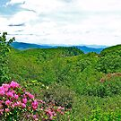 Great Smoky Mountains by David Davies