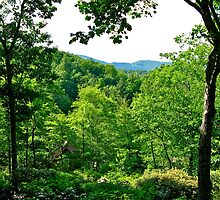 GreatSmoky Mountains II by David Davies