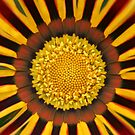 Daisy A Day  by Sherie Howard