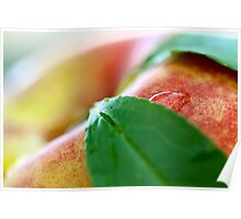 Water Drop on Nectarine Poster