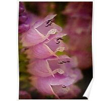 False dragonhead flowers Poster