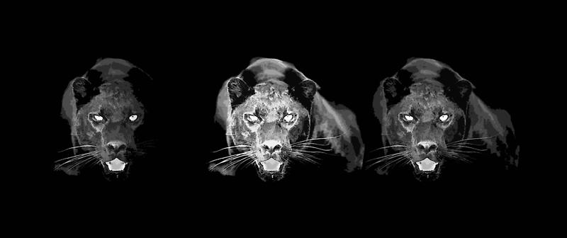 Jaguar - Black Panther  by madeinatlantis