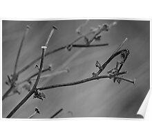 Twig in Black and White Poster