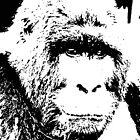Pop Art Gorilla by madeinatlantis