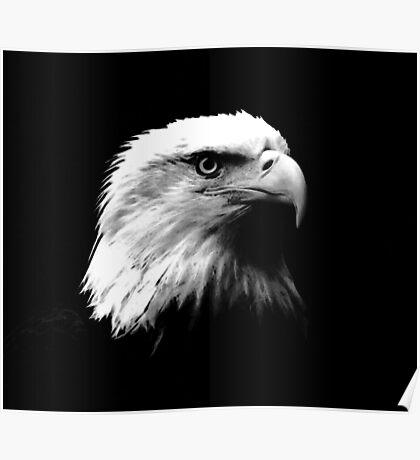 Black & White American Bald Eagle Poster