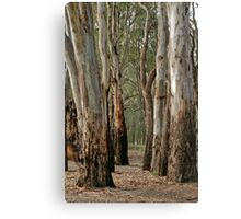Red gums, beside the Murray River near Robinvale Canvas Print