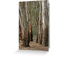 Red gums, beside the Murray River near Robinvale Greeting Card