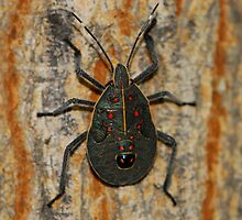 stink bug by davvi