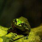 Frog on a log by Sheree Rushworth