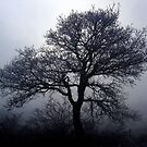 Tree in the Mist by Reuben Vick