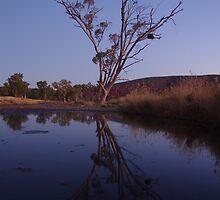 Reflected Tree by Linda Fury
