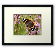 Red Admiral Wings Spread Framed Print