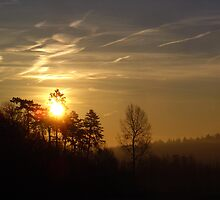 Sunrise Over Woodland - Fawler, Oxfordshire by Reuben Vick